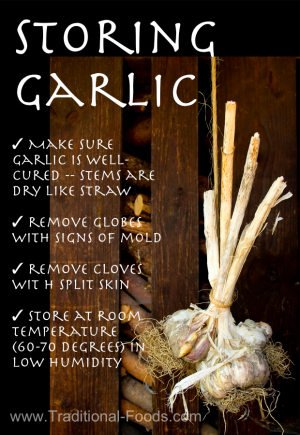 Growing Garlic Selecting Varieties Planting Harvesting Storing Garlic Gardening