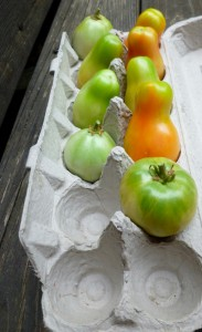 ripening-tomatoes-1