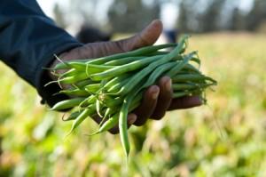green-beans-stock