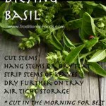 Drying Basil @ Traditional-Foods.com
