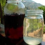 water-kefir-jars-300