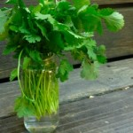 Storing Fresh Herbs @ Traditional-Foods.com