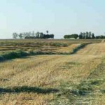 Cutting Hay @ Traditional-Foods.com