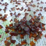 Zucc-Raisins Dehydrating @Traditional-Foods.com