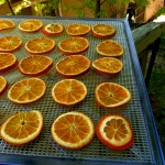 dried-orange-slices-tray-600